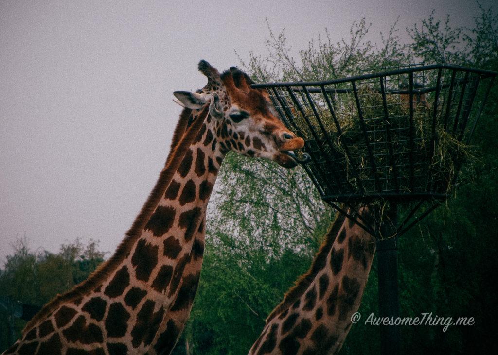 Bekse Bergen Zoo