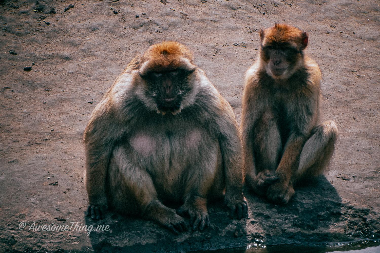 Dierenrijk Zoo Holland
