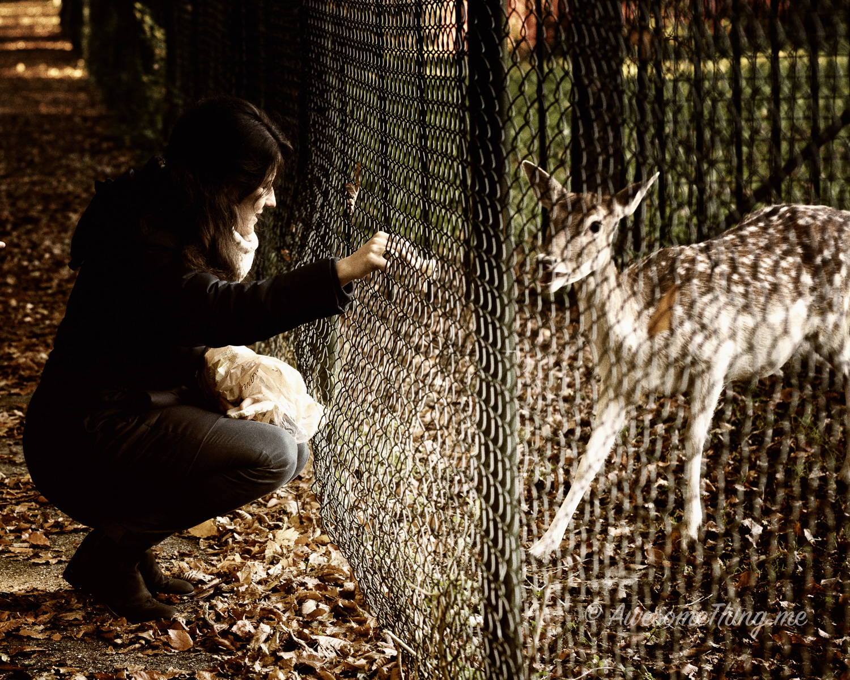 Feeding the Deer Park Holland