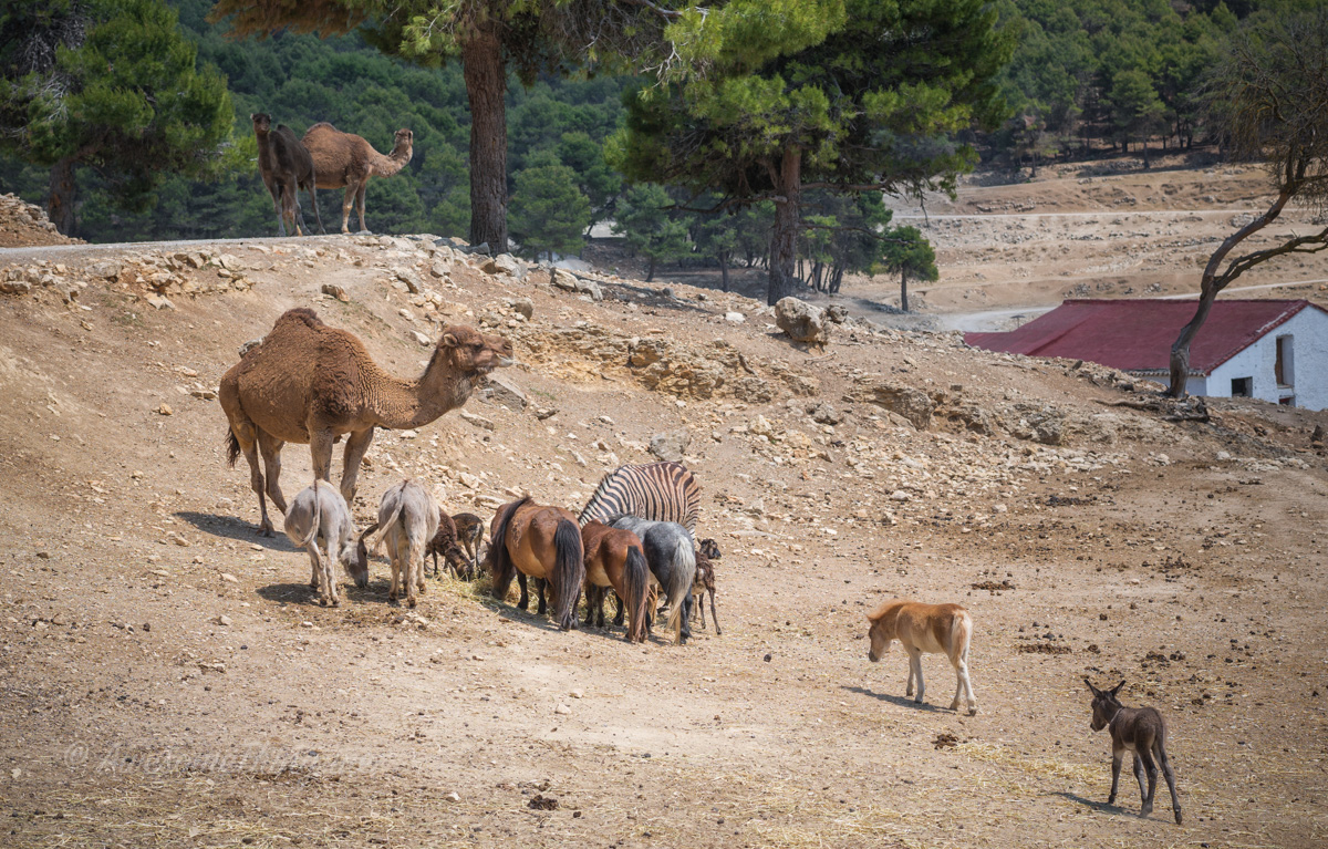 Safari Park, Spain