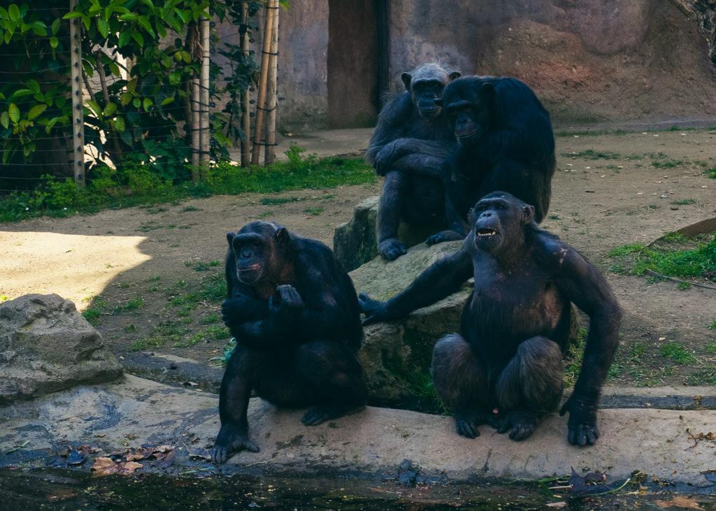 Барселона с детьми, зоопарк