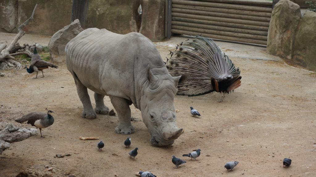 Зоопарк, Барселона