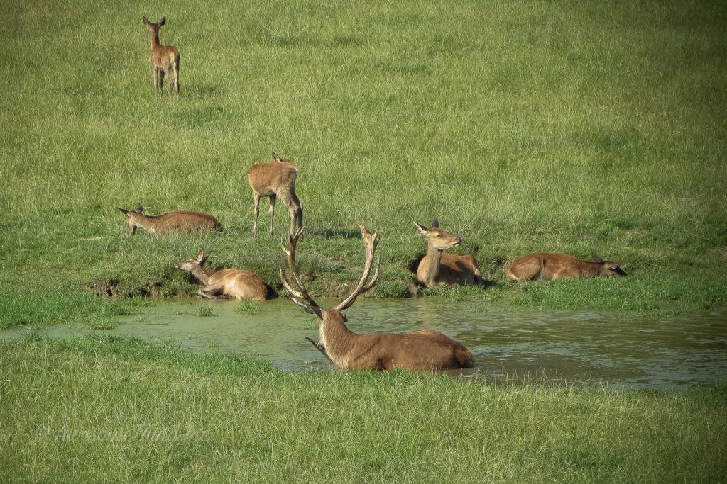Зоопарк Розегг, Каринтия