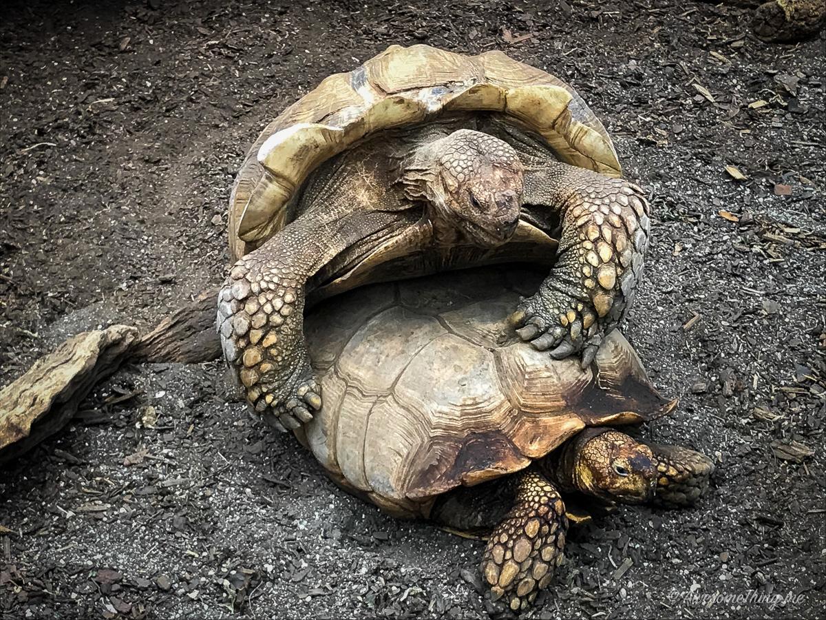 Зоопарк рептилий под Братиславой, Австрия