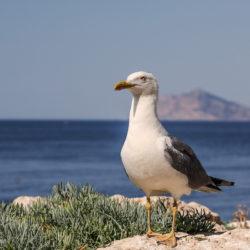 seagull, costa blanca