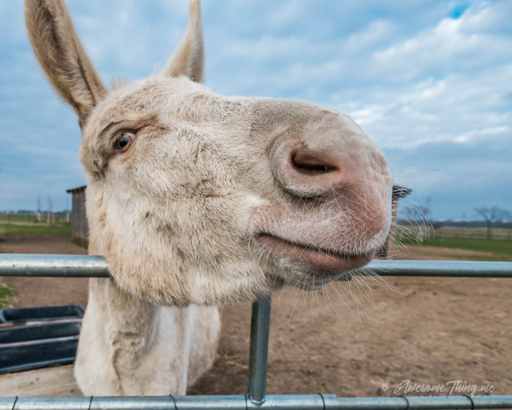 Donkey asks: wtf